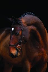 Rambo Micklem Comp Bridle